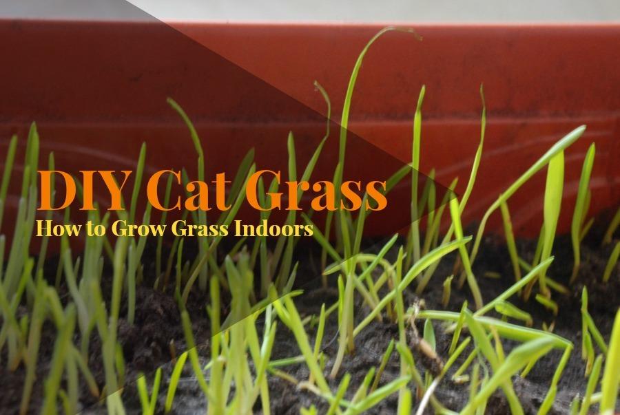 DIY_Cat_Grass_title